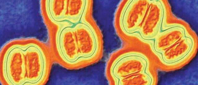 Вакцинация от менингококковой инфекции